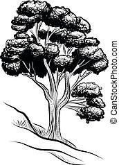 drzewo, cielna