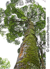 drzewo, deszcz, tropikalny, mech, pień, jego
