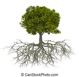 drzewo, i, korzeń