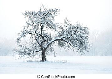 drzewo jabłka, pod, śnieg, w, zima