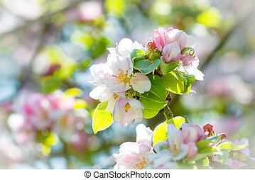 drzewo jabłka