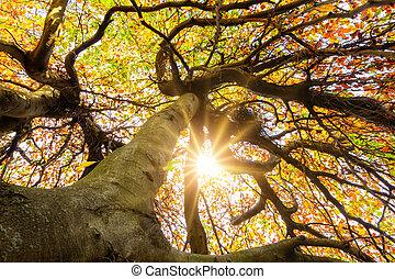 drzewo, korona, słońce, przez, lustrzany