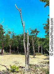 drzewo las, zmarły
