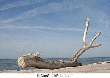 drzewo, mumiowaty