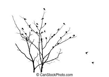 drzewo, nie, liście, z, ptak, -, sylwetka
