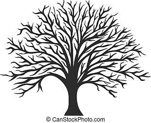 drzewo, obiekt, sylwetka, dąb