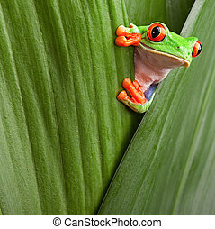 drzewo, patrzył, żaba, czerwony