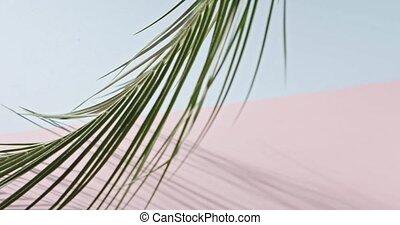 drzewo, pełny, dłoń, różowy, powolny, długi, tropikalny, tło., duotone, 240fps, gałąź, branch., ruch, błękitny, 1080p., dotykanie, video, hd, cienie, liście, gładka zieleń