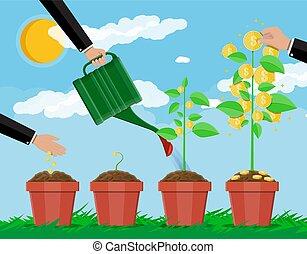 drzewo., pieniądze, gradacja, rozwój, growing.