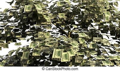 drzewo pieniędzy, w, finansowy, jesień