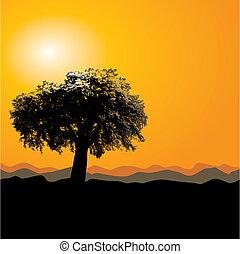 drzewo, przystojny