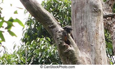 drzewo, ptak, dziobiąc