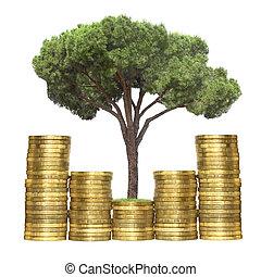drzewo, rozwój, z, monety