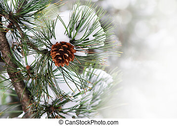 drzewo sosny