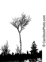 drzewo, sylwetka, na białym, tło, wektor, ilustracja