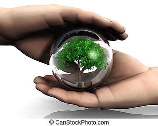 drzewo, w, niejaki, bańka