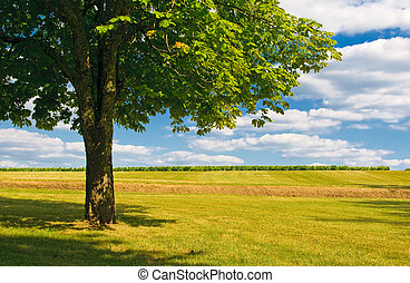 drzewo, w, niejaki, pole
