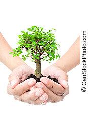 drzewo, w, siła robocza