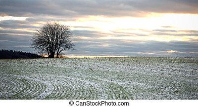 drzewo, w, zima