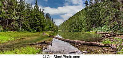 drzewo, water., alaska, pochmurne niebo, skagway., zielony, lodowaty, panoramiczny, lake., las, upadły, krajobraz, piękny, błękitne tło, soczysty, okoliczny, jezioro