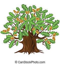 drzewo, wektor, dąb, żołędzie, illust