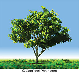 drzewo., wektor, zielony