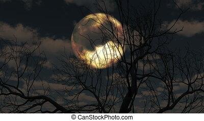 drzewo, wschody, chmury, przez, księżyc