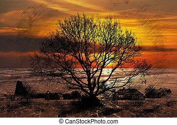 drzewo, zachód słońca