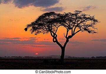drzewo, zachód słońca, sylwetkowy