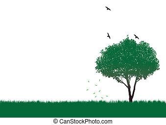 drzewo, zielony