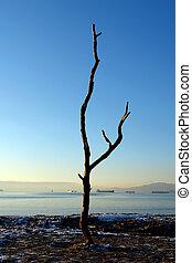 drzewo, zmarły