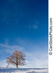 drzewo, zmontowanie, samotny, zima, przeciw