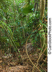 dschungel, asia, thickets, tropische , spur, bambus, osten, süden