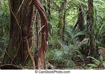 94 Dschungel