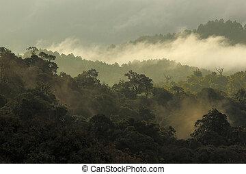 dschungel, wald, und, berg, mit, nebel