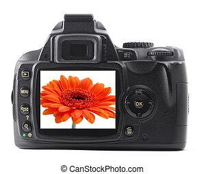 dslr, με , καλοκαίρι , λουλούδι