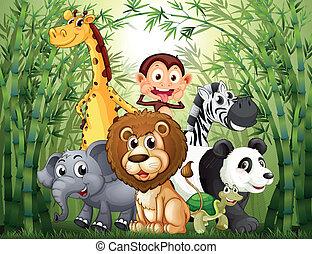 dużo, bambus, zwierzęta, las