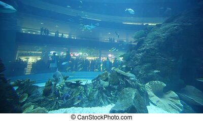 An amazing aquarium inside Dubai Mall - DUBAI - APRIL 17: An...