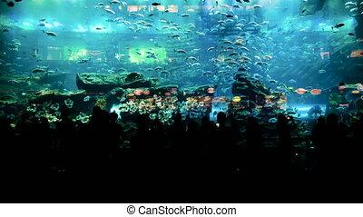 DUBAI, UAE - SEPTEMBER 23, 2014: Timelapse of people watching fish at the huge aquarium gallery in Dubai