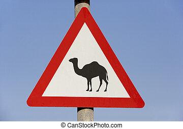 dubai, znak, strzec się, wielbłąd