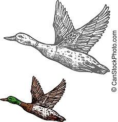 Duck bird sketch of wild or farm waterfowl animal