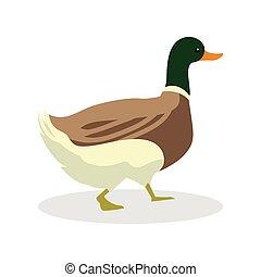 duck color illustration design