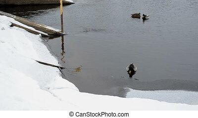 duck dam old winter snow