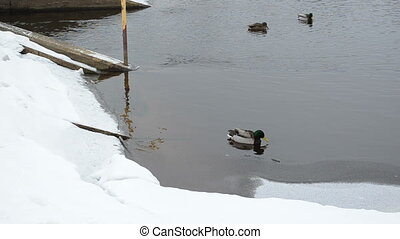 duck dam old winter snow
