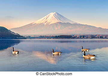 Duck floating in lake at Mt. Fuji