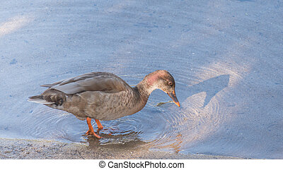 duck on the shore of a river