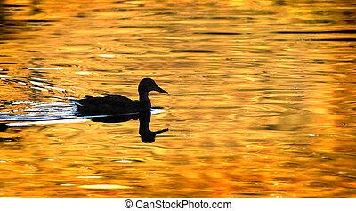 Duck Silhouette on Golden Pond