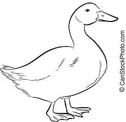 Duck Sketching Vector Illustration