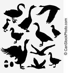 Duck, swan, goose silhouette - Duck, swan, goose, poultry...