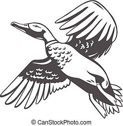 duck., vektor, ilustrace, osamocený, dále, white.
